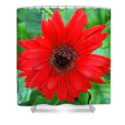 Shower Curtain featuring the photograph A True Red by Sandi OReilly