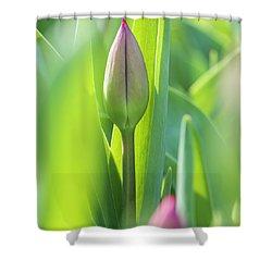 Green Pink Wall Art - Spring Tulips Keukenhof Flower Garden Photography Art Print Shower Curtain