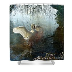 Shower Curtain featuring the photograph A Very Fine Swan Indeed by LemonArt Photography