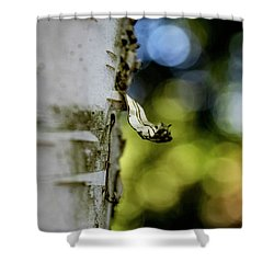A Walk In The Woods Is Good For The Soul Shower Curtain