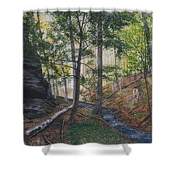 A Walk In The Woods Shower Curtain by Vicky Path