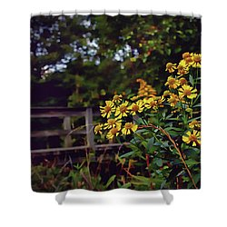 Shower Curtain featuring the photograph A Walk With Wildflowers by Jessica Brawley