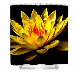 A Water Lily Shower Curtain