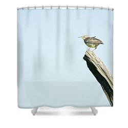 A Western Meadowlark Sits On A Piece Shower Curtain