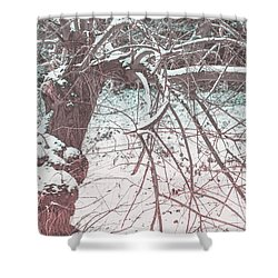 A Winter Tree Shower Curtain