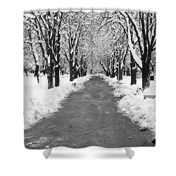 A Winter's Path Shower Curtain by Rae Tucker