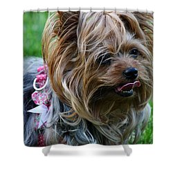 Shower Curtain featuring the photograph A Wonderful Dog by Vadim Levin