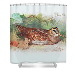A Woodcock Resting Shower Curtain