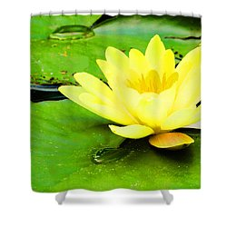 A Yello Nympheas Shower Curtain