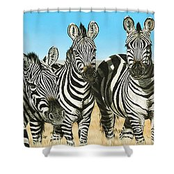 A Zeal Of Zebras Shower Curtain
