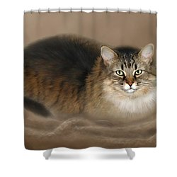 Abby Shower Curtain by Barbara Hymer