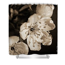 Shower Curtain featuring the photograph Abiding Elegance by Linda Lees