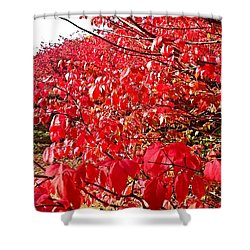 Ablaze Shower Curtain by Jana E Provenzano