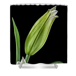 White Oriental Lily About To Bloom Shower Curtain