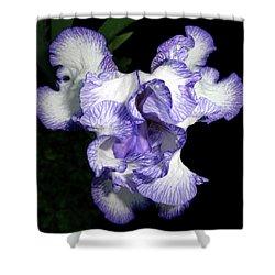 Above A Purple Edged Iris Shower Curtain by Tara Hutton