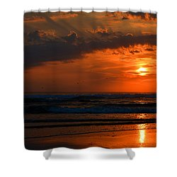 Above And Below Shower Curtain by Dianne Cowen