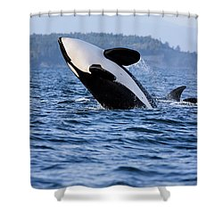 Absolutely Free - Whale Art Shower Curtain