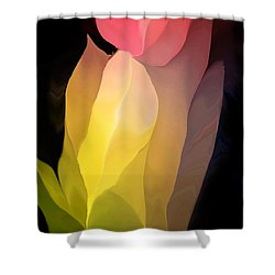 Abstract 082312 Shower Curtain by David Lane