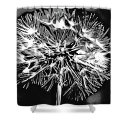 Abstract Dandelion Shower Curtain
