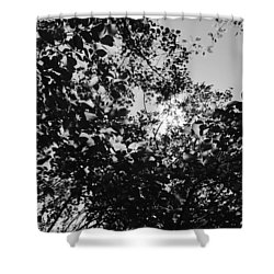 Shower Curtain featuring the photograph Abstract Leaves Sun Sky by Chriss Pagani