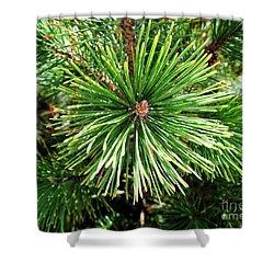 Abstract Nature Green Pine Tree Macro Photo 210  Shower Curtain