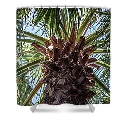 Abstract Nature Tropical Palm Tree 1872a Green Shower Curtain