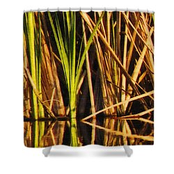 Abstract Reeds Triptych Top Shower Curtain by Steven Sparks