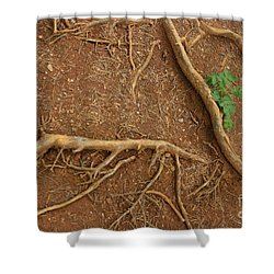 Abstract Roots Shower Curtain by Mary Mikawoz