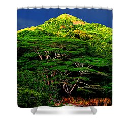 Abstract Trees 37 Shower Curtain