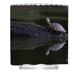 Shower Curtain featuring the photograph Abstract Turtle by Douglas Stucky
