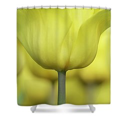 Abstract Yellow Tulips Flowers Photography Online Art Print Shop Shower Curtain by Artecco Fine Art Photography