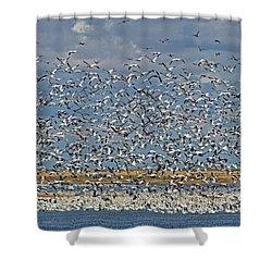 Shower Curtain featuring the photograph Abundance.. by Nina Stavlund