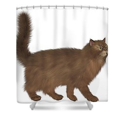 Abyssinian Cat Shower Curtain by Corey Ford