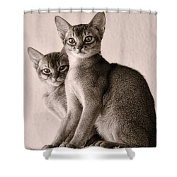 Abyssinian Kittens Shower Curtain