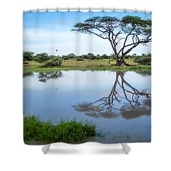 Acacia Tree Reflection Shower Curtain
