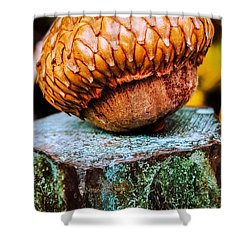 Shower Curtain featuring the photograph Acorn by Bruce Carpenter