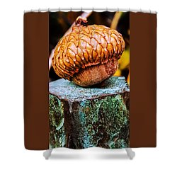 Acorn Shower Curtain