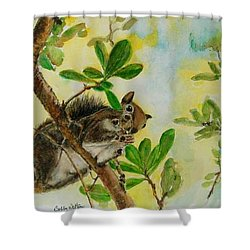 Acorn Lunch Shower Curtain