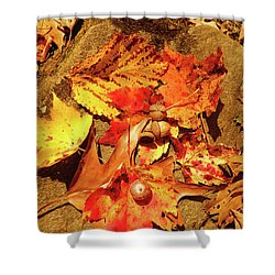 Shower Curtain featuring the photograph Acorns Fall Maple Leaf by Meta Gatschenberger
