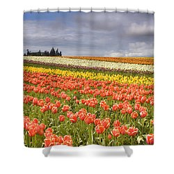 Across Colorful Fields Shower Curtain by Mike  Dawson