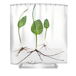 Adder'stongue Shower Curtain