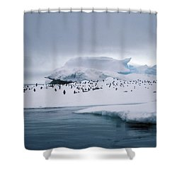 Adelie Penguins On Iceberg Weddell Sea Shower Curtain by Brian Lockett