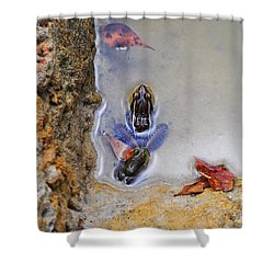 Shower Curtain featuring the photograph Adopted Amphibian by Al Powell Photography USA