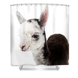 Shower Curtain featuring the photograph Adorable Baby Alpaca Cuteness by TC Morgan