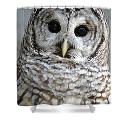 Shower Curtain featuring the photograph Adorable Barred Owl  by Rebecca Overton