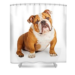 Adorable English Bulldog Looking Into The Camera Shower Curtain