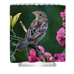 Adorable House Finch Shower Curtain