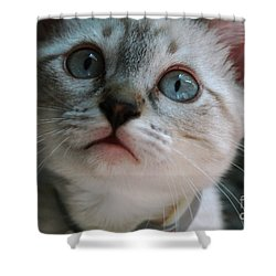 Shower Curtain featuring the photograph Adorable Kitty  by Kim Henderson