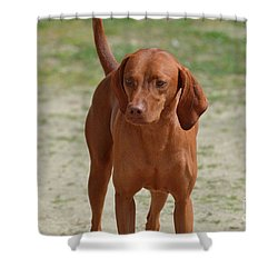 Adorable Redbone Coonhound Standing Alone Shower Curtain