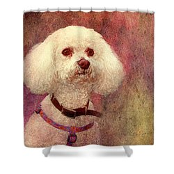 Adoration - Portrait Of A Bichon Frise  Shower Curtain